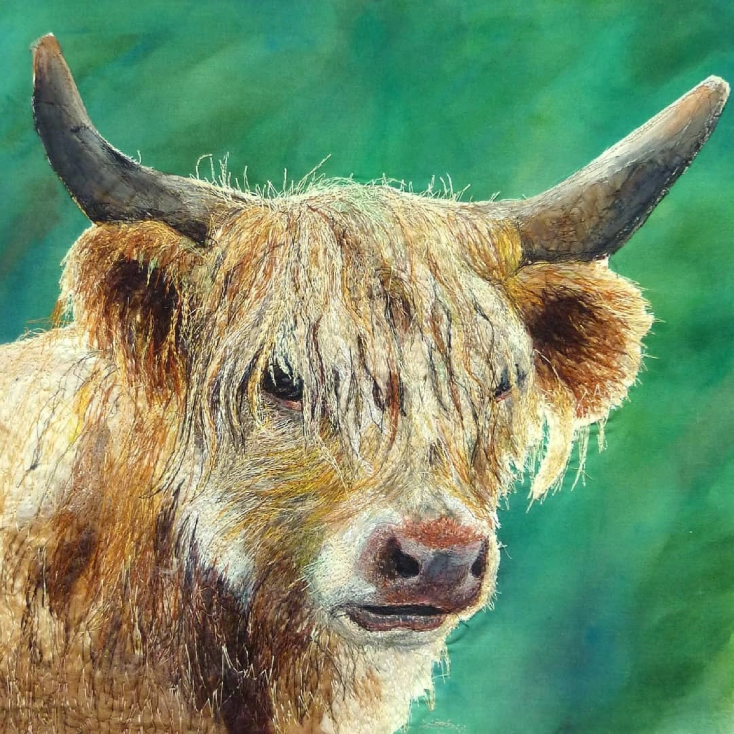 'Blonde Highland Cow'