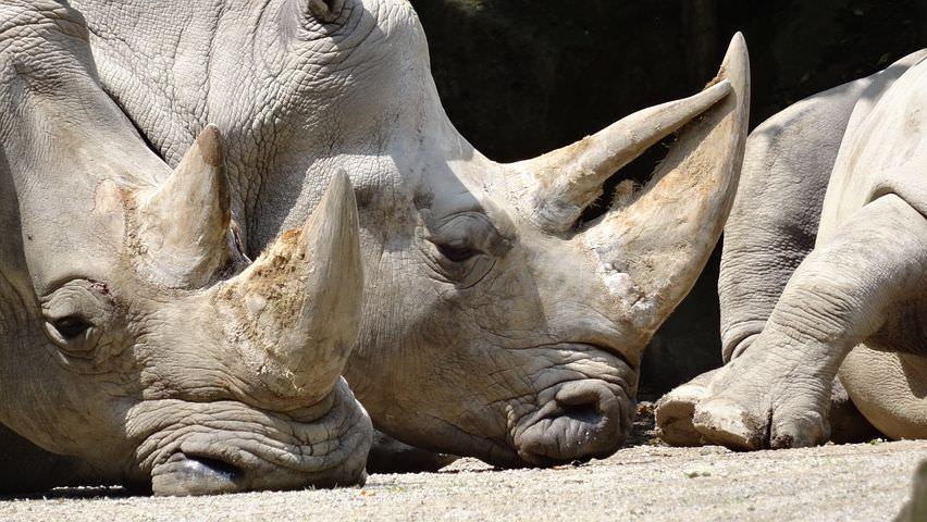 Rhinos - About Us.jpg