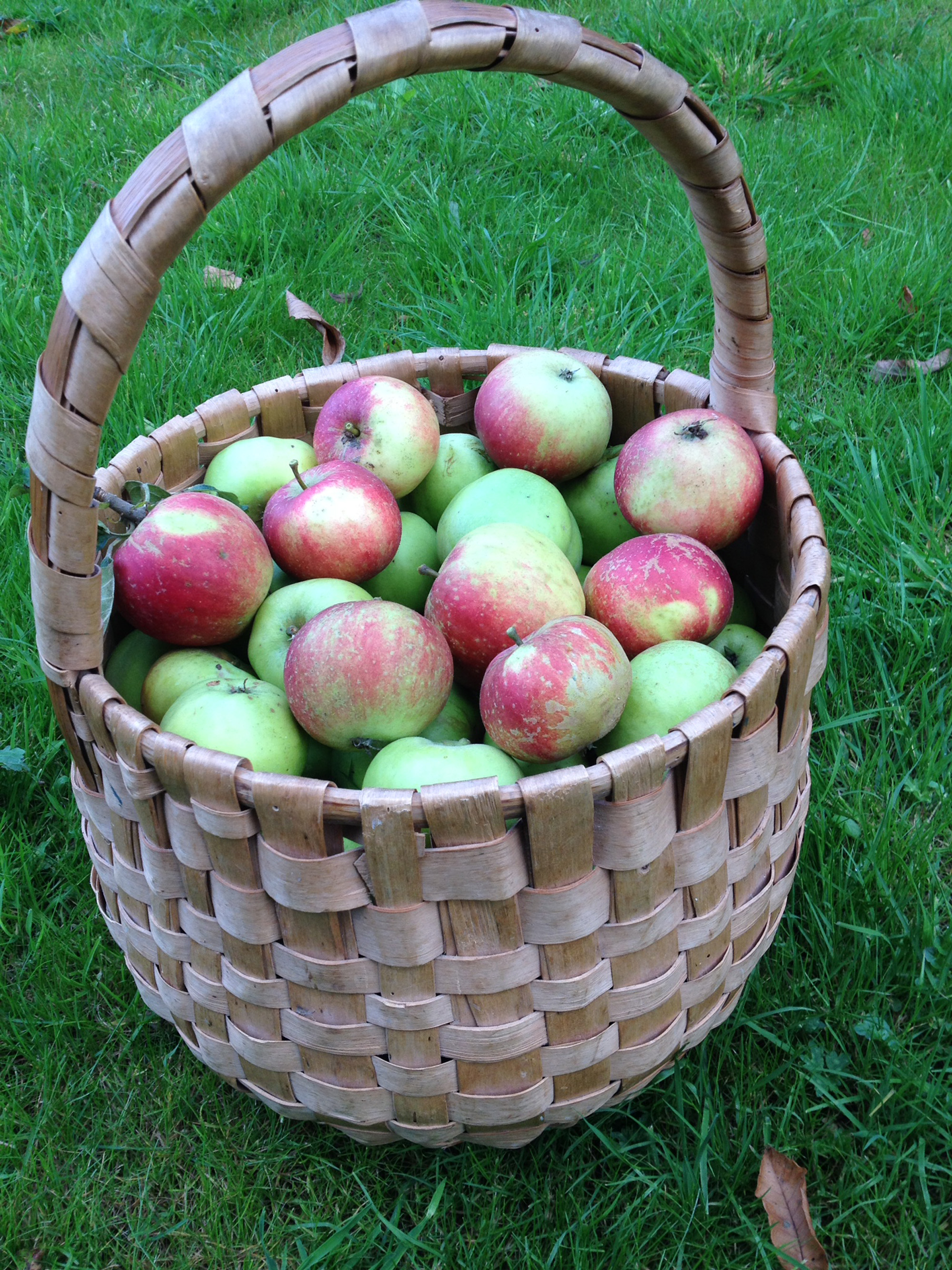 Apples from the Llwyn orchard