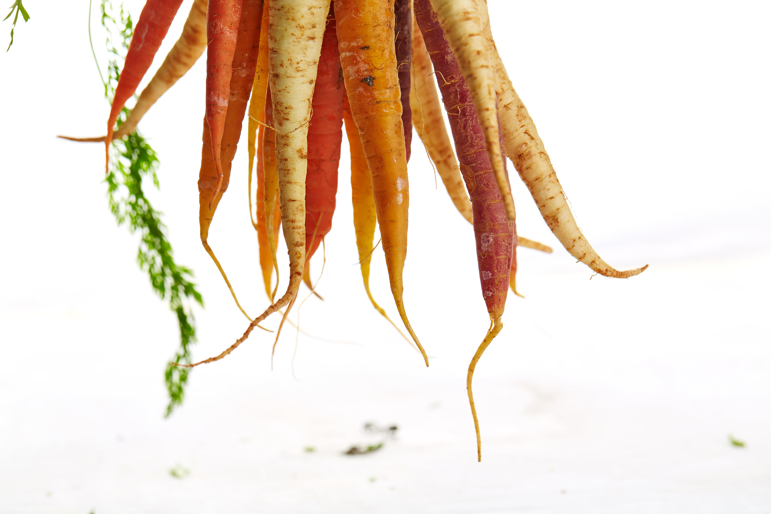 Carrots & Caraway - Carrots and caraway belong to the same plant family.
