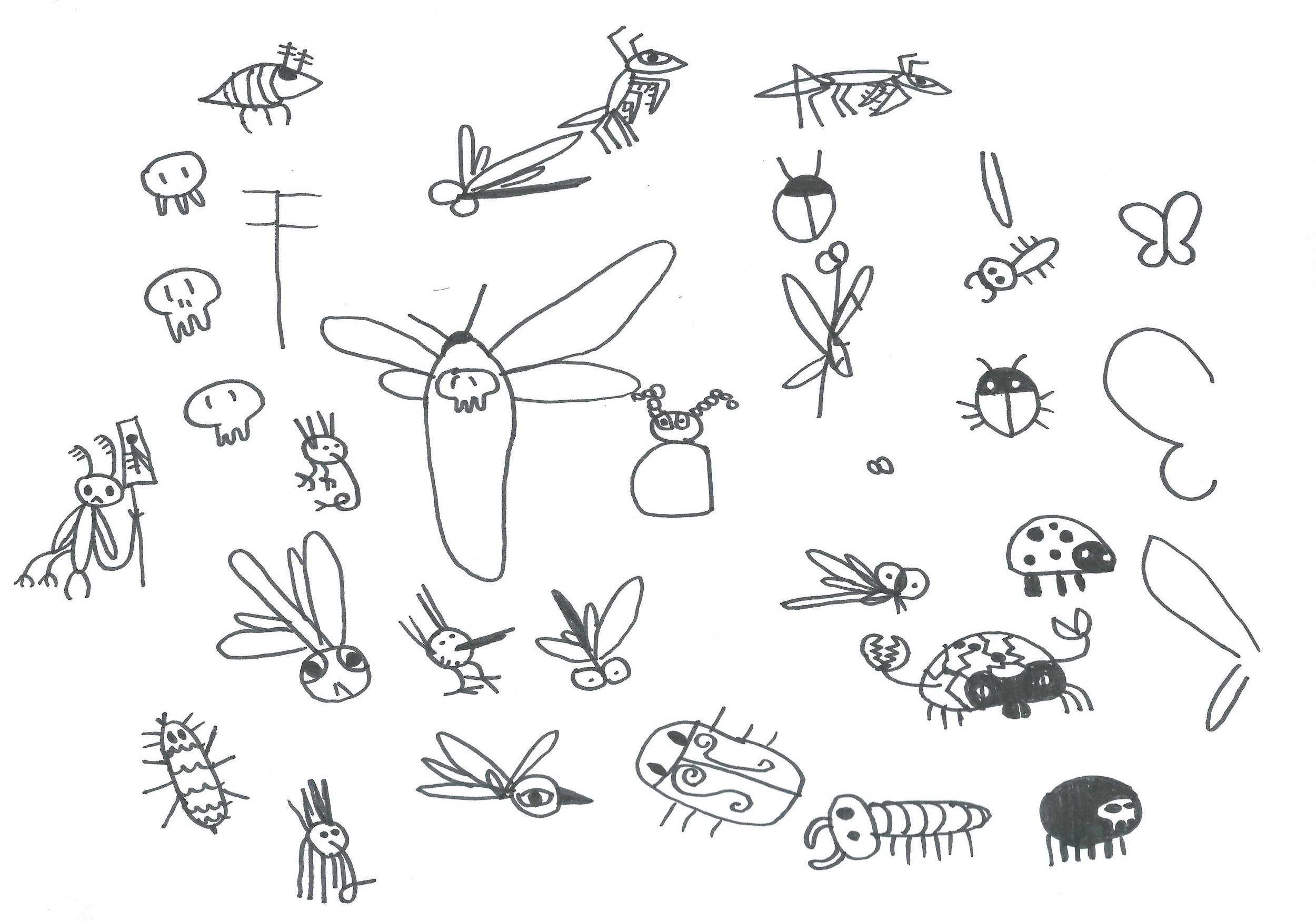 Insects-design.JPG