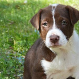 Puppy Protocols -