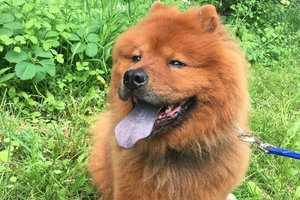 Adult Dog Protocols -