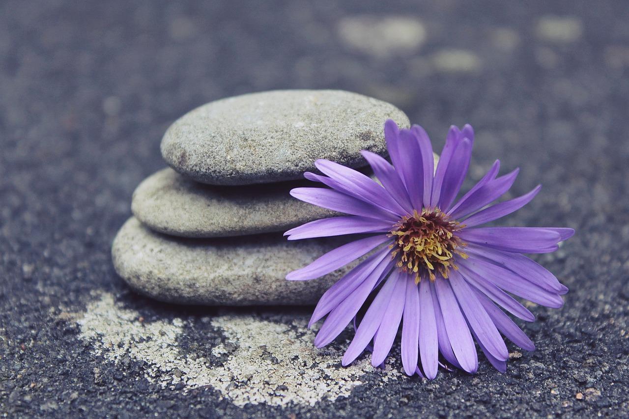 stones and flower.jpg