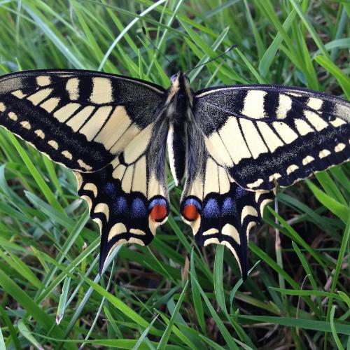 Butterflies (1).png