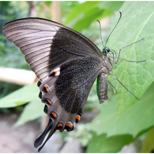 Butterflies (2).png