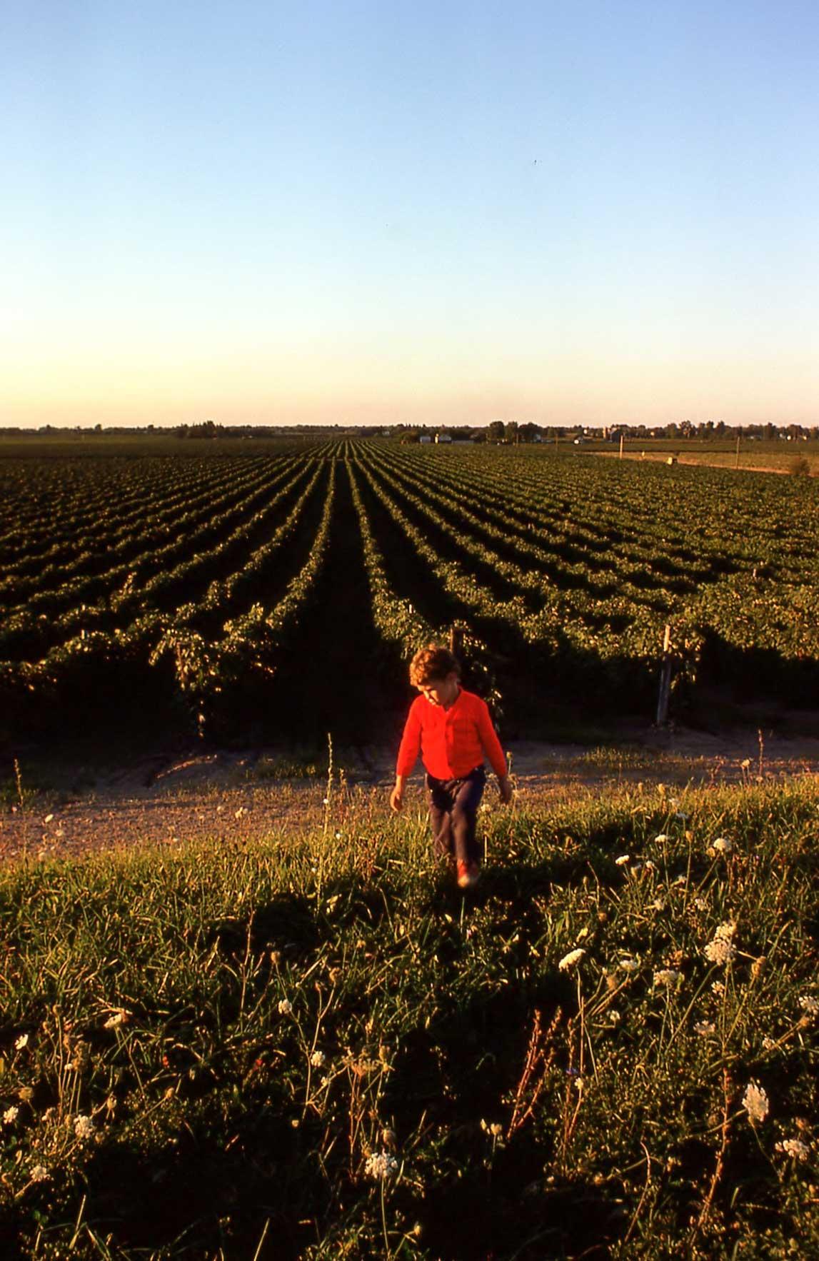 Jon Jurmain as a young boy in a Niagara vineyard
