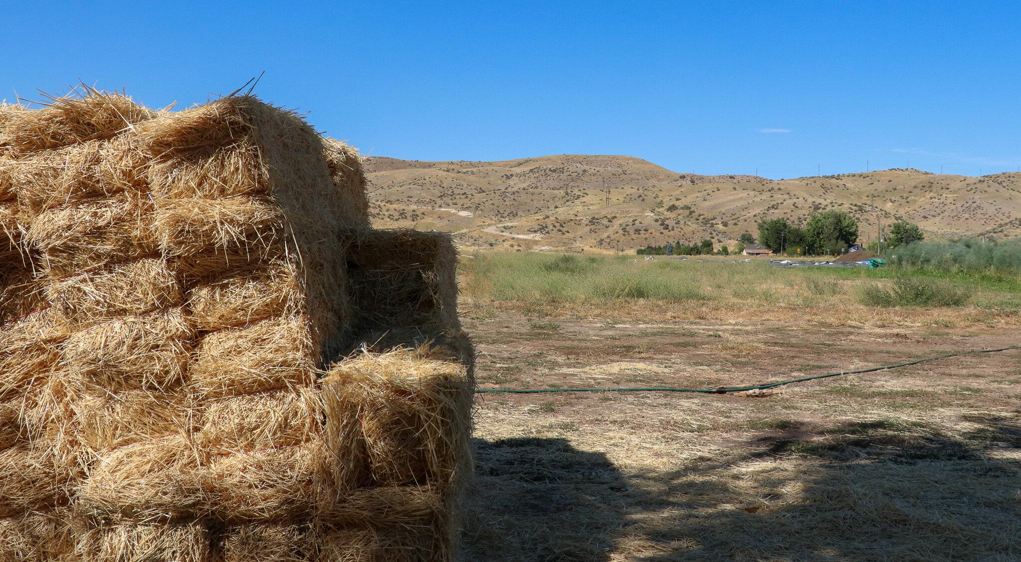 Bales at Winnower Farms