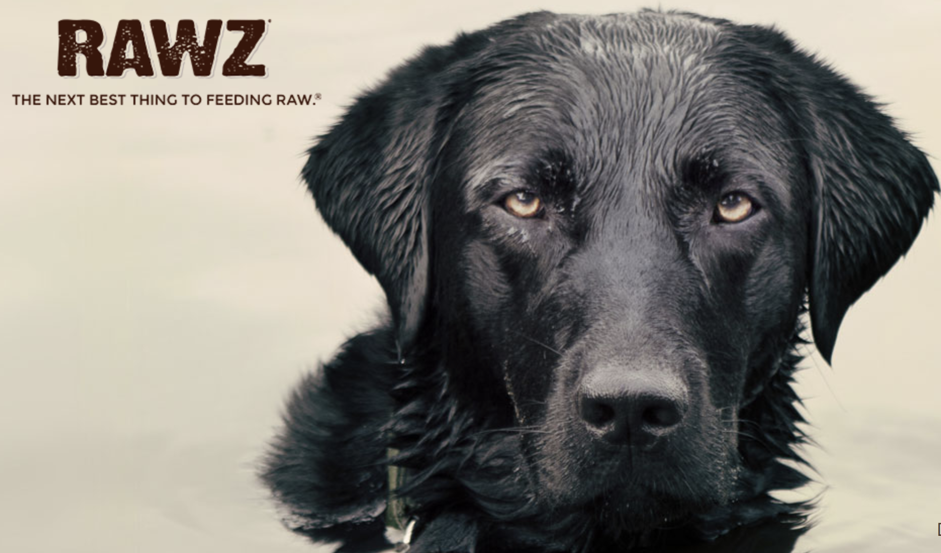 RAWZ: Our first goal is to offer your pet nutritionally exceptional recipes that provide the highest meat content possible, utilizing natural alternatives to highly-processed ingredients. Our second goal is to give back. Our sons both acquired life-altering injuries. As they were recovering, we experienced the spiritual impact a pet can have on its family. Living through that difficult time, we received tremendous comfort and support from Boomer, our family's yellow lab. In recognition of the crucial role Boomer played as we transitioned into a new chapter of our lives together, we pledged as a family to donate 100% of the profits (after taxes and reserves) from RAWZ® to three main causes: providing service dogs, spinal cord injury and traumatic brain injury.