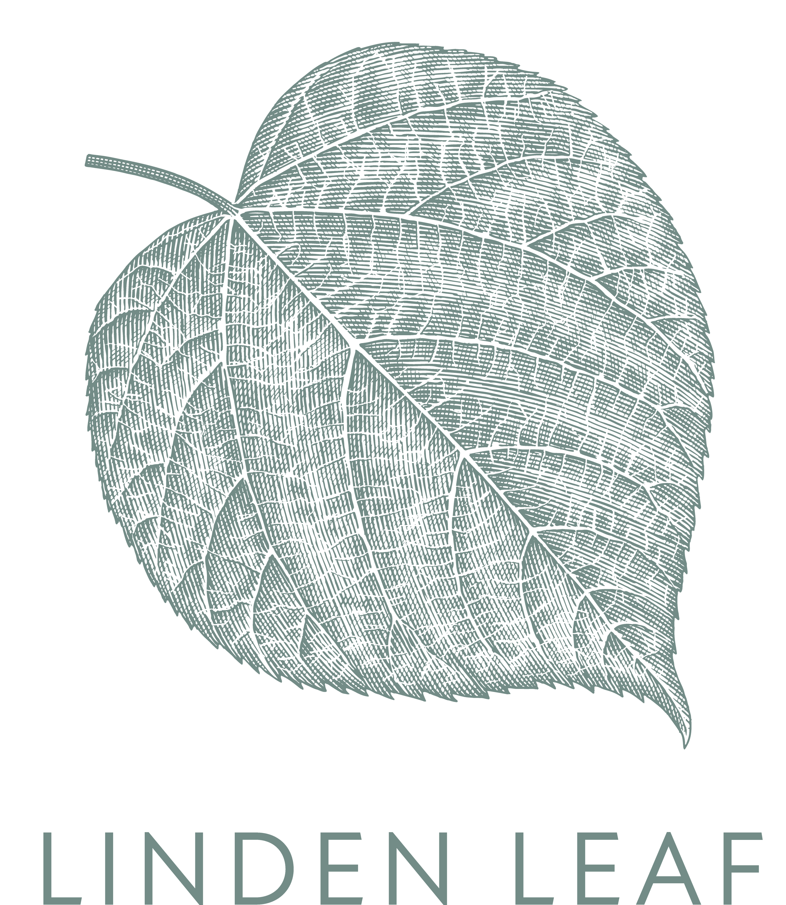 Linden Leaf art - detailed version with text 5555.png
