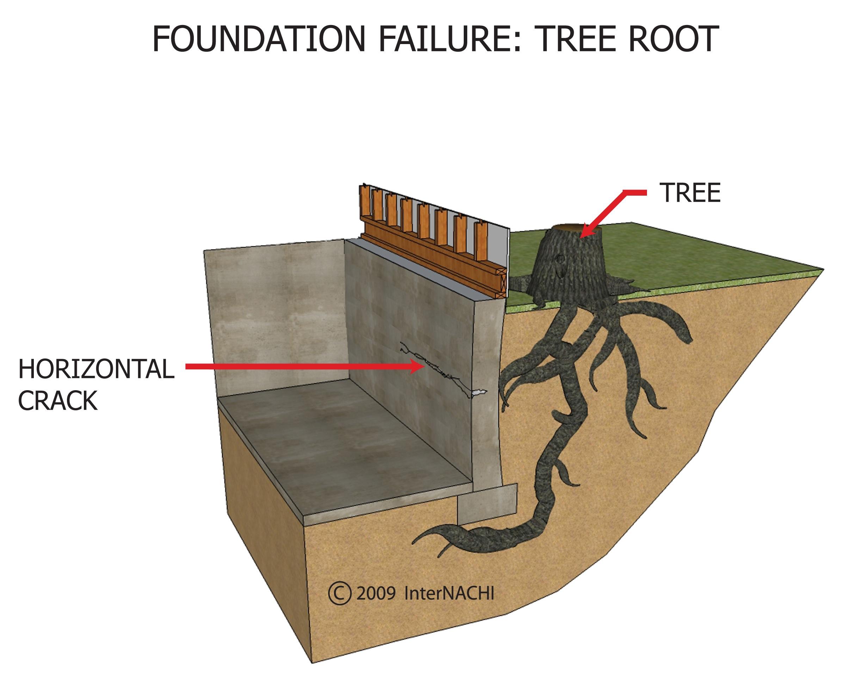 Tree root Foundation crack