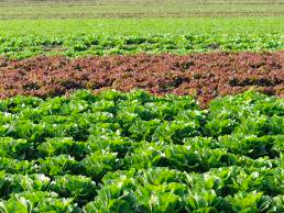 Muck Crops Agricultural Research Station -