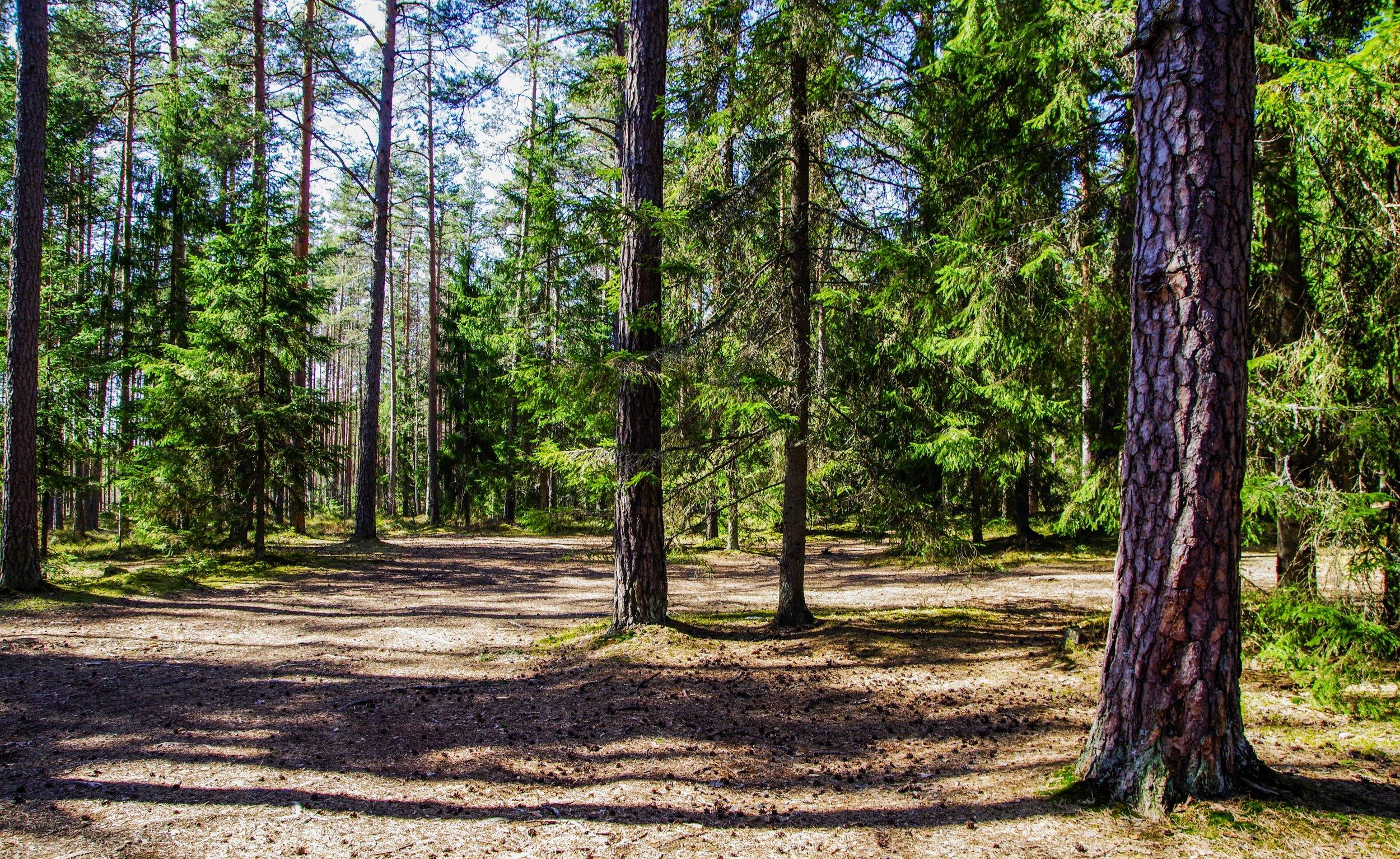 NorthCarolina_mountains_land.jpg