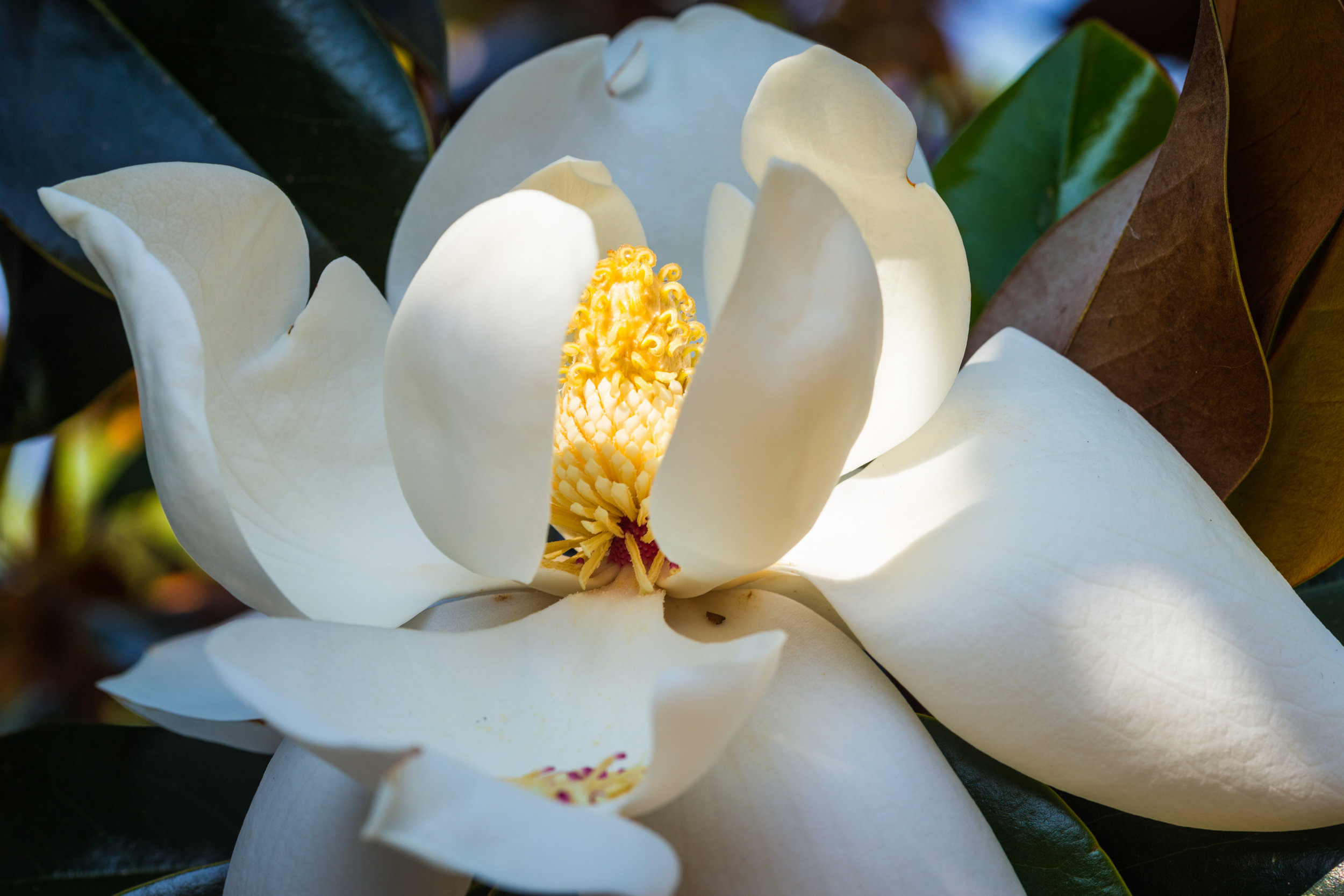 Arboretum-0686.jpg