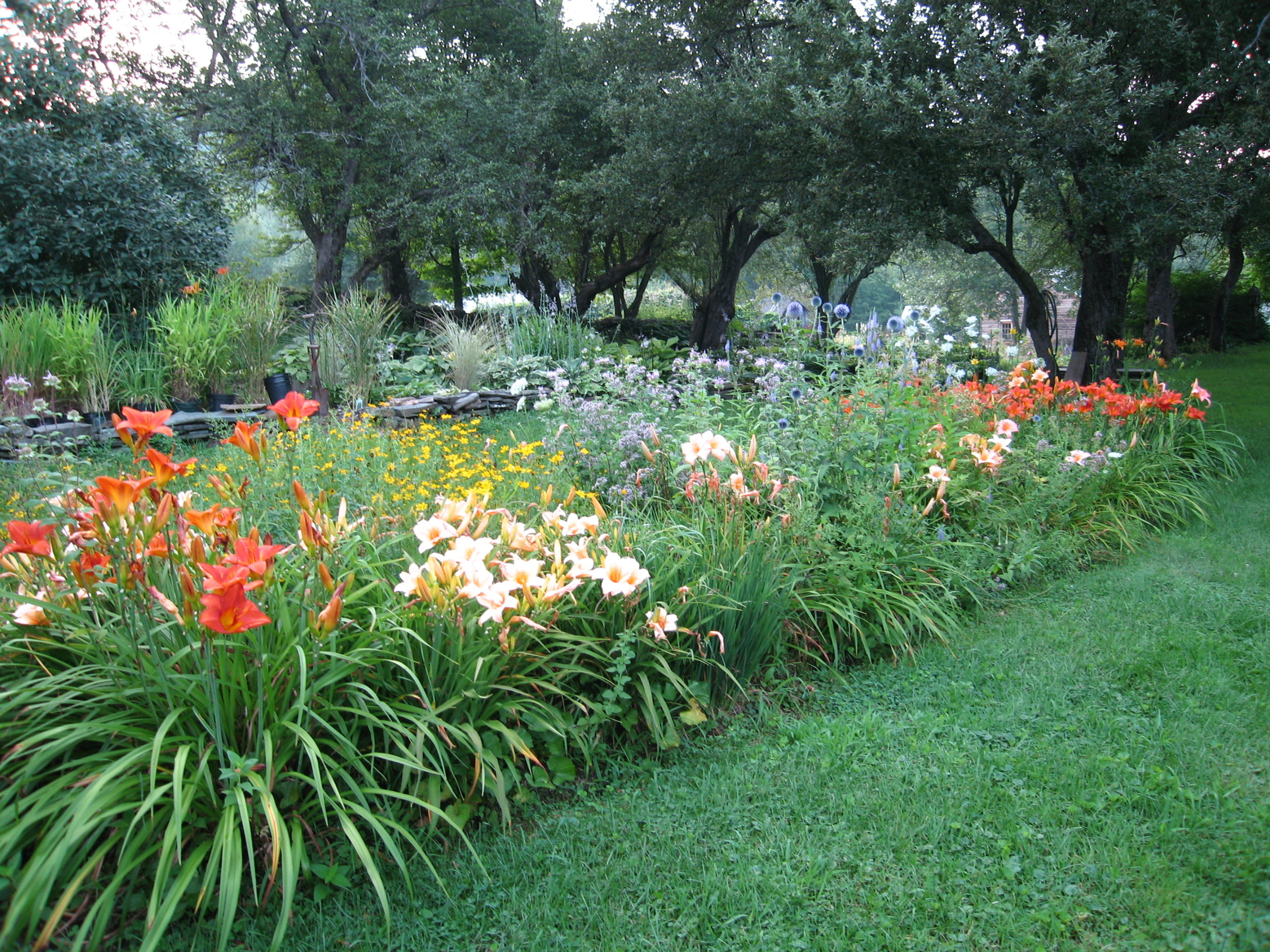 Dalily & perennial mix garden   1669.jpg