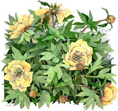"Border Charm Peony - Large Unframed: 22 x 23"", $355Large Framed: 33 x 33.5"", $786Small Unframed: 15.5 x 16"", $125Small Framed: 21 x 21.5"", $329"