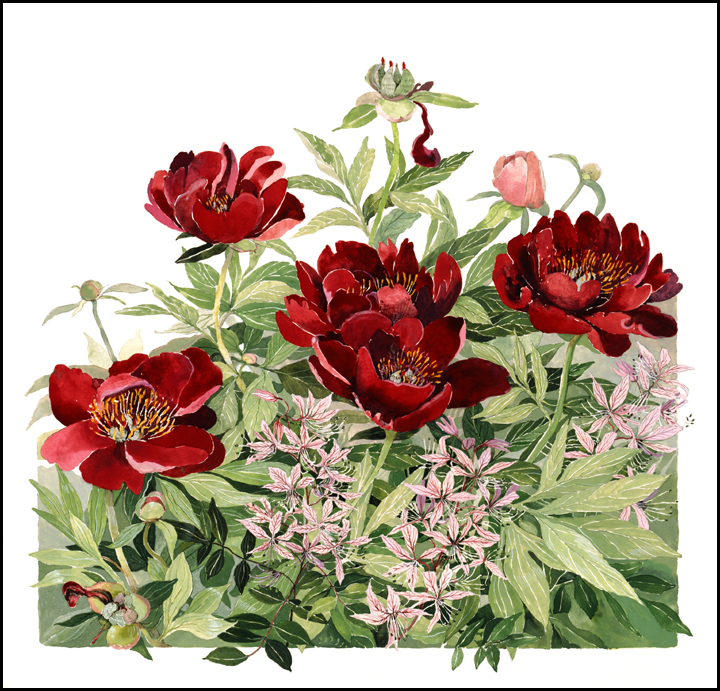 "Buckeye Belle Peony - Large Unframed: 22 x 23"", $355Large Framed: 33 x 33.5, $786Small Unframed: 15.5 x 16"", $125Small Framed: 21 x 21.5"", $329"