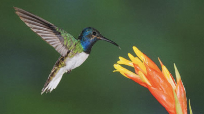 Blooms Attract Hummingbirds -