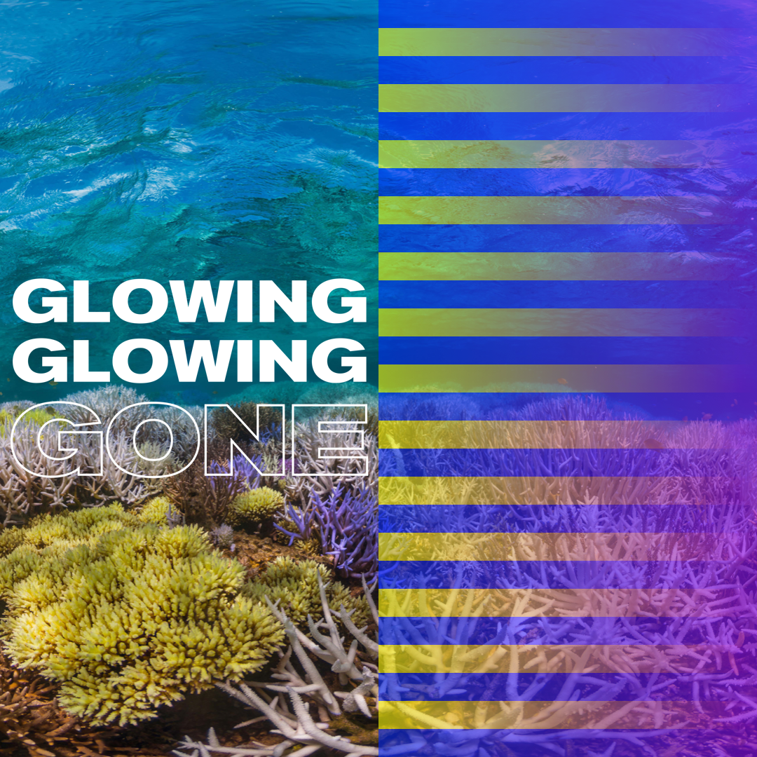 """Corals sometimes produce brightly colored chemicals to protect themselves during ocean heatwaves. This custom photo filter leverages corals' florescent """"dying"""" colors to connote the alarm their extinction warrants. Coral is home to ~1M species and supports a quarter of all marine life. It contributes $375B/year to the global economy, providing food and livelihoods for 1B people. Learn more at  time.com/coral , follow the  #GlowingGone  campaign, and either  download the filter  or search for it on Facebook to frame your profile photo."""
