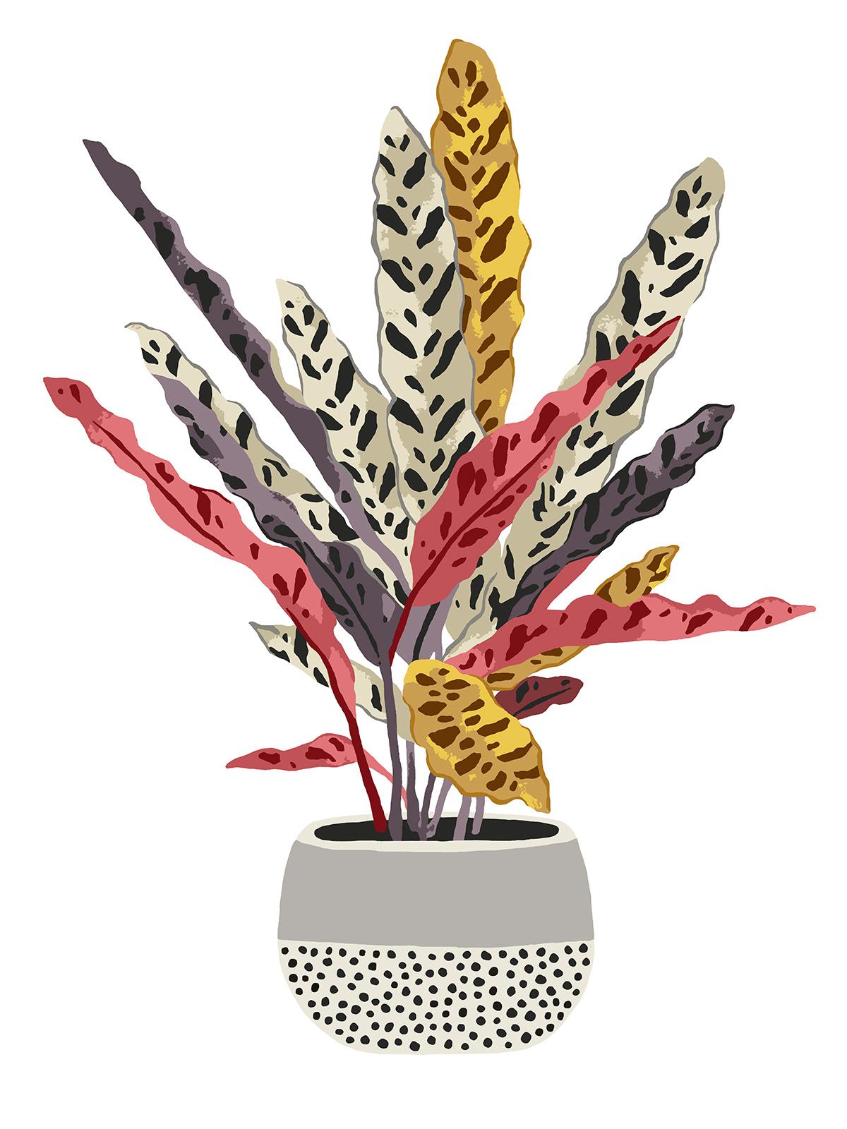 FINAL POT PLANT SINGLE 2.jpg