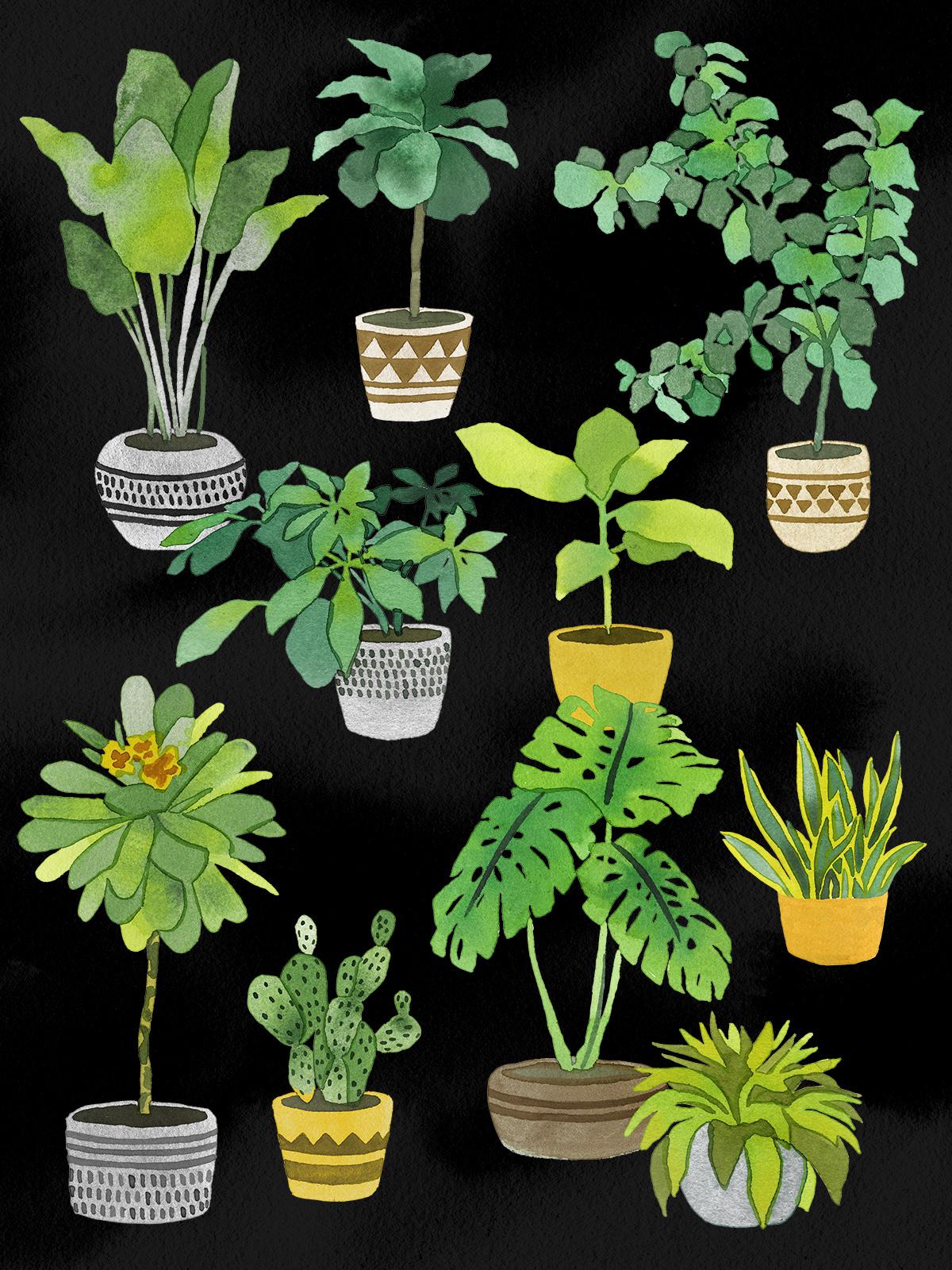 FINALPOT PLANTS.jpg