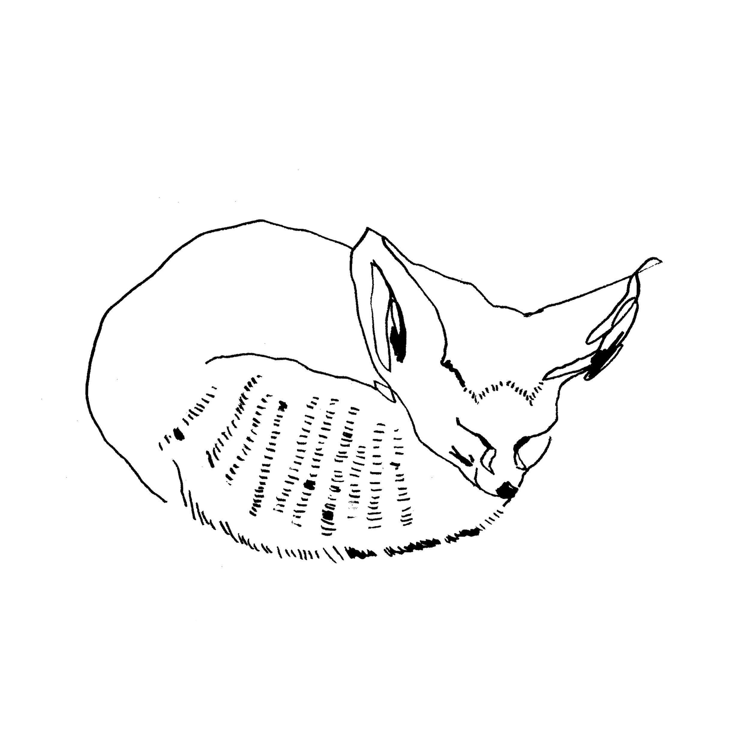fox2 10x10.jpg