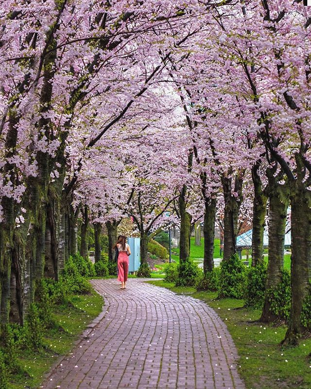 It's National Love a Tree Day! 🌳 So, we thought we'd feature our favourite trees in Burlington — the gorgeous Sakura Trees at Spenser Smith Park that are in bloom as we speak! ⠀⠀⠀⠀⠀⠀⠀⠀⠀⠀⠀⠀ To give back to our beautiful community, our goal is to plant one tree for every project we complete this year! Stay tuned! ⠀⠀⠀⠀⠀⠀⠀⠀⠀⠀⠀⠀ Photo by talented local photographer @wadoodbhatti.