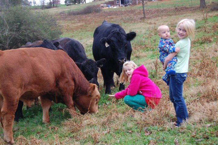 kids_cattle.jpg
