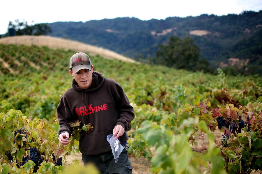 Kenny Hobo Wines vineyard.jpg