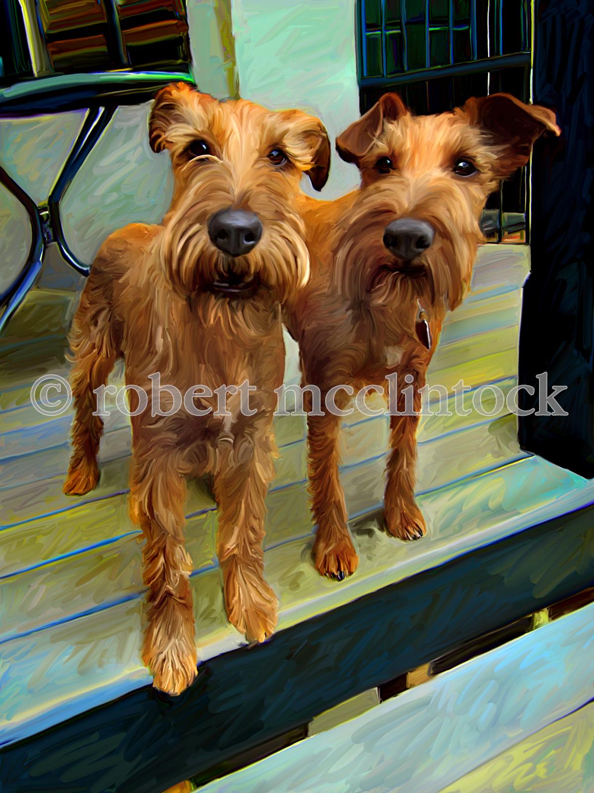irish-terriers-769.jpg