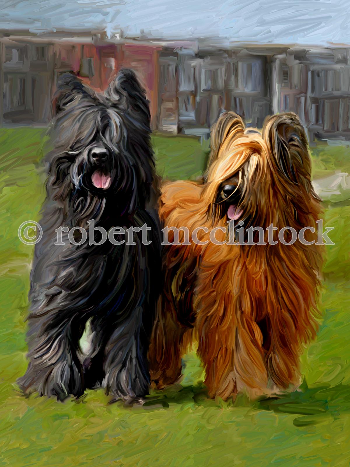 briard-dogs-molly.jpg