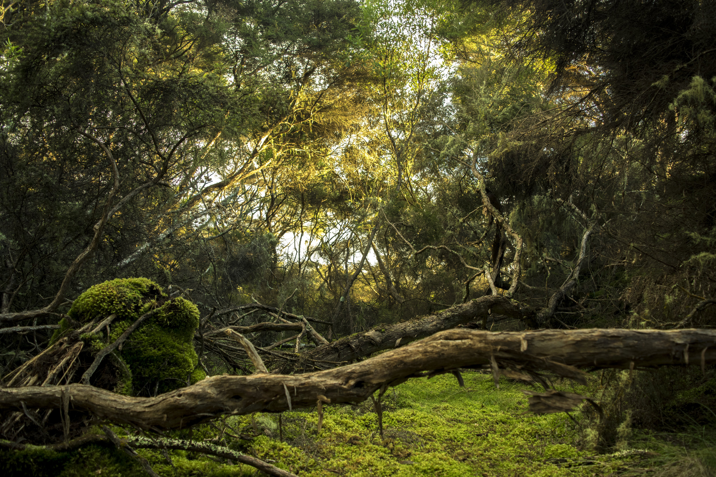 Frostgrave: Ghost Archipelago Bestiary - A veritable cavalcade of carnivorous creatures