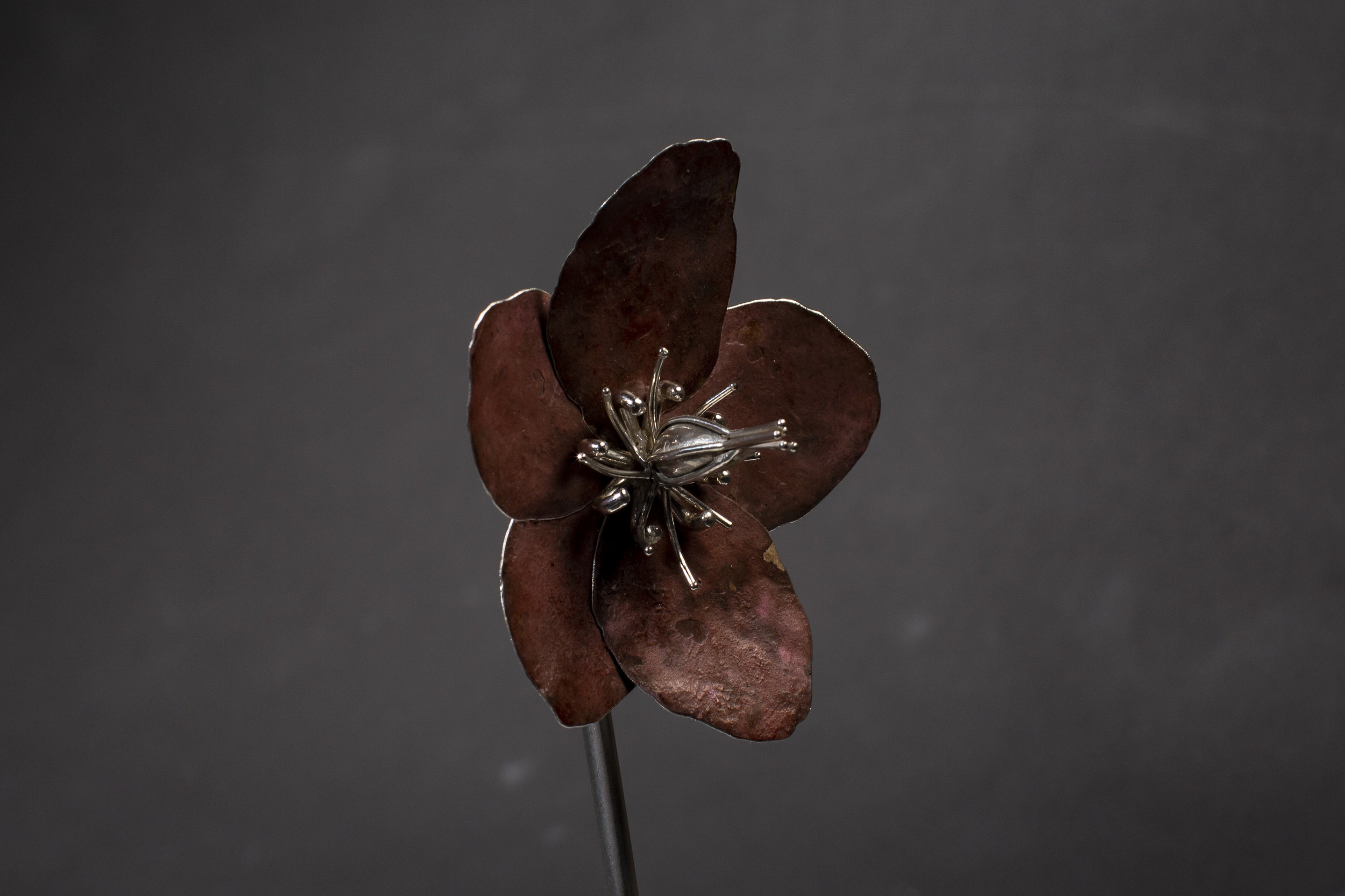 Pink Patinated Hellebore (Christmas Rose)
