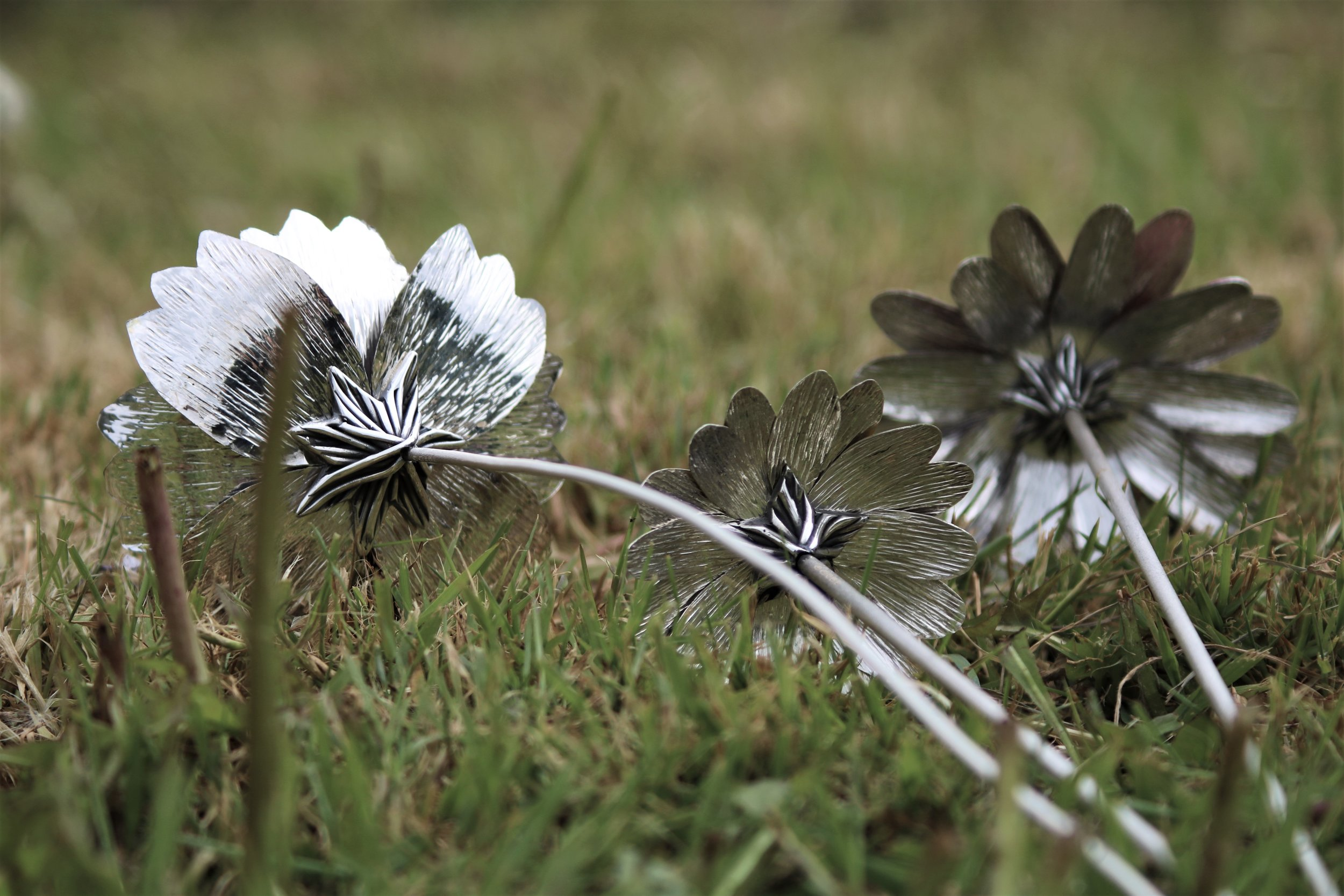 Silver Patinated Cosmos, Rudbeckia & Echinacea