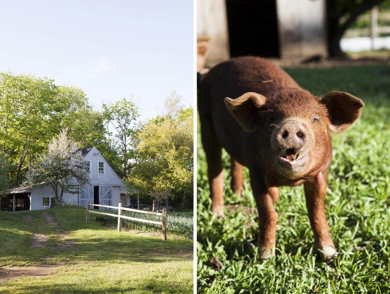 farm+3.jpg