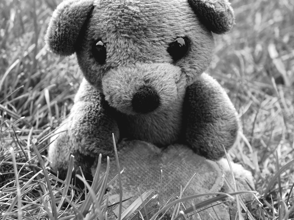 teddy from