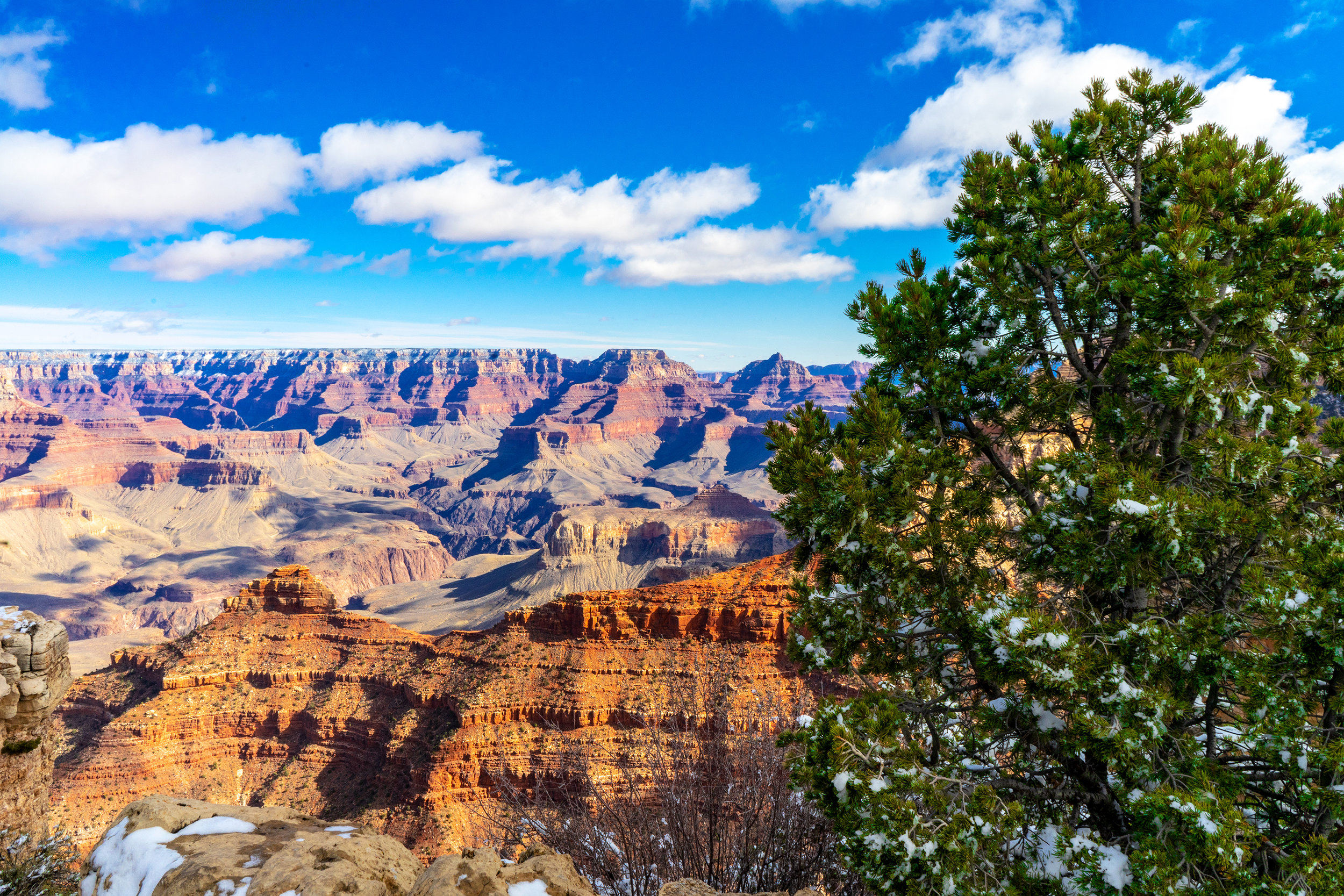 Grand Canyon one Tree (Gallery Size).jpg