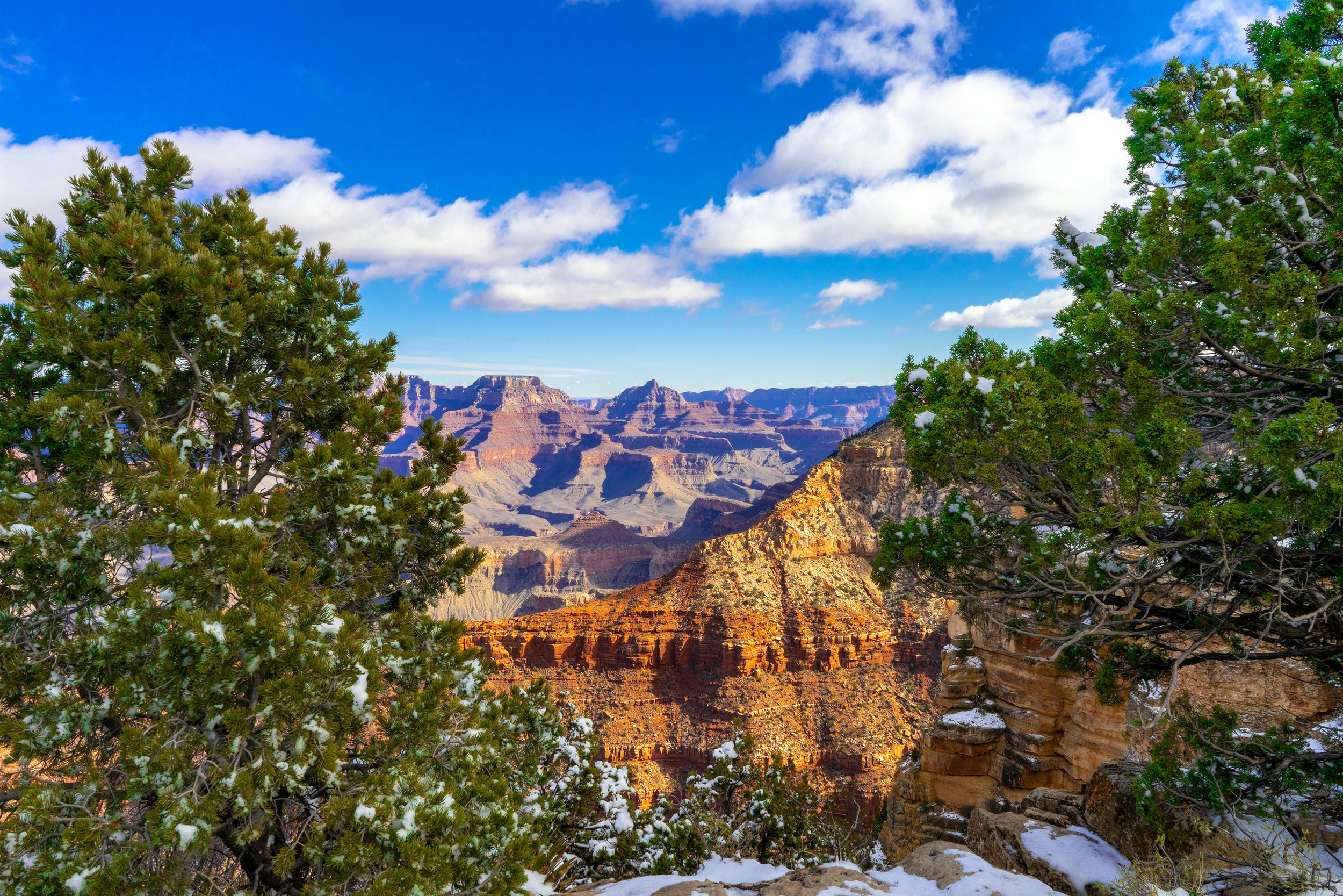 Grand Canyone between Trees.jpg