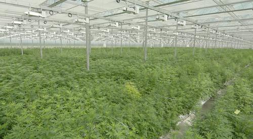 High+Park+Farms_Plants.png