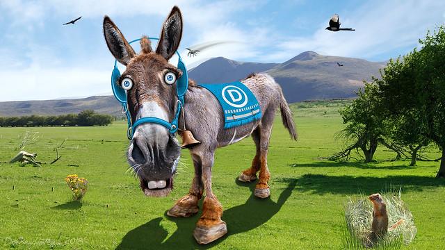 Democratic Donkey - Caricature (   DonkeyHotey   )