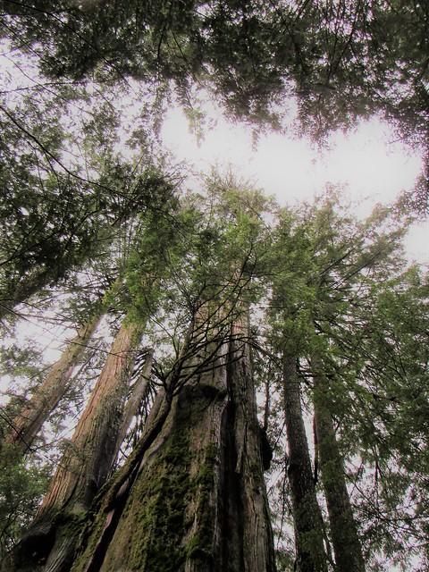 The Forest ( Jennifer C. )