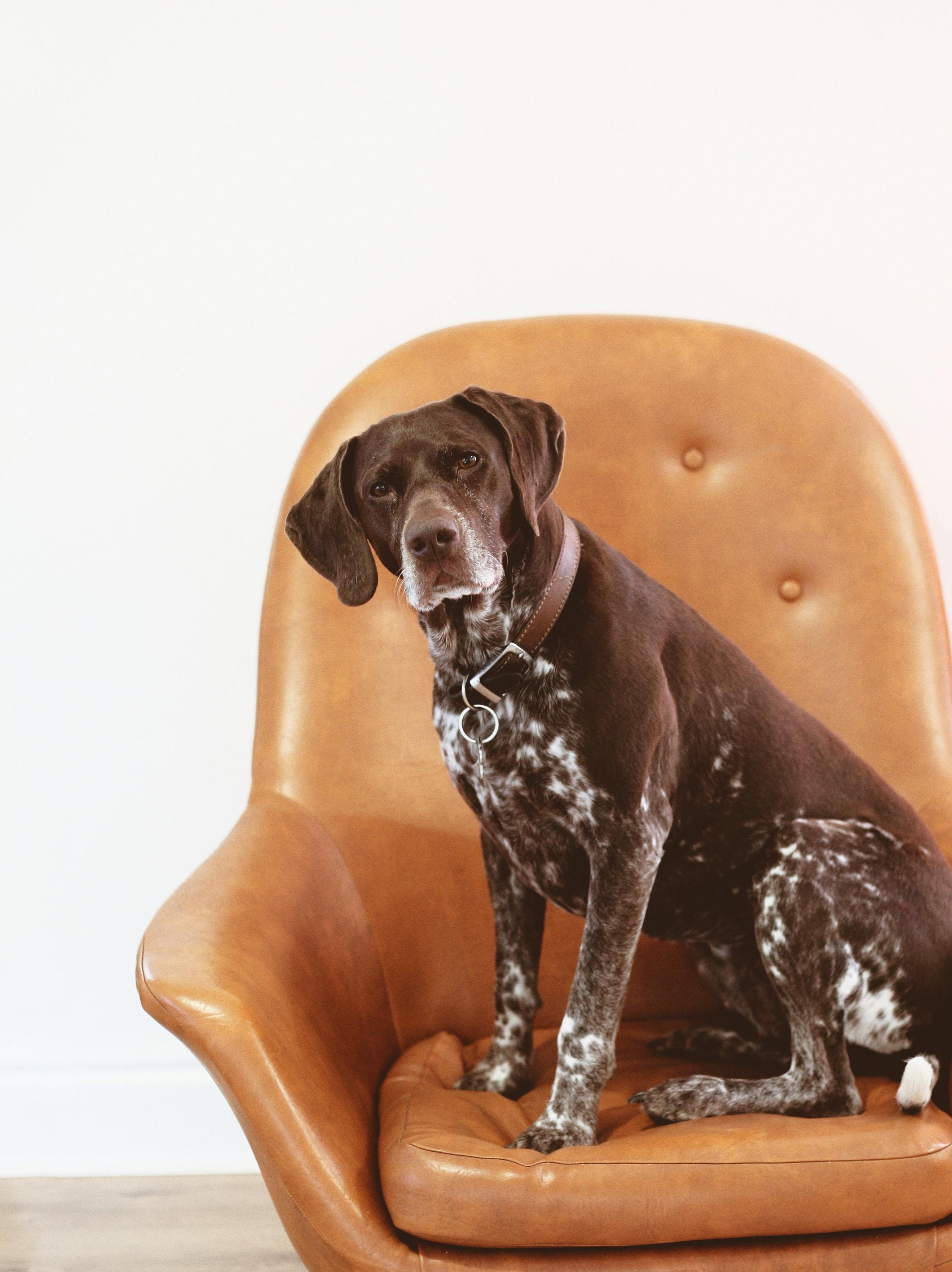 Dog fundraiser for help with vet bills.jpg
