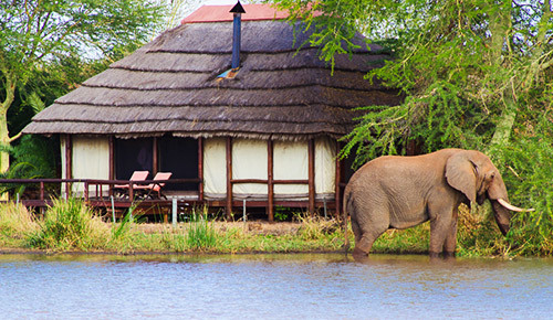 Kruger National Park.jpg