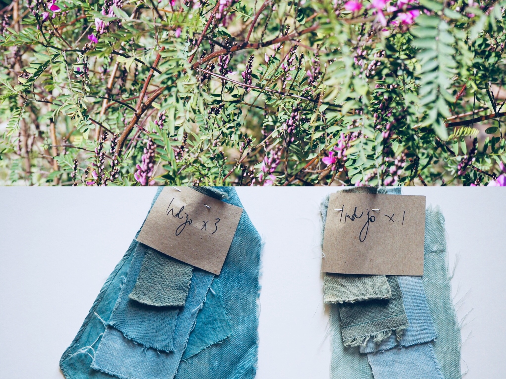 2019_What--Makes_Natural Dye Colours 12.jpg
