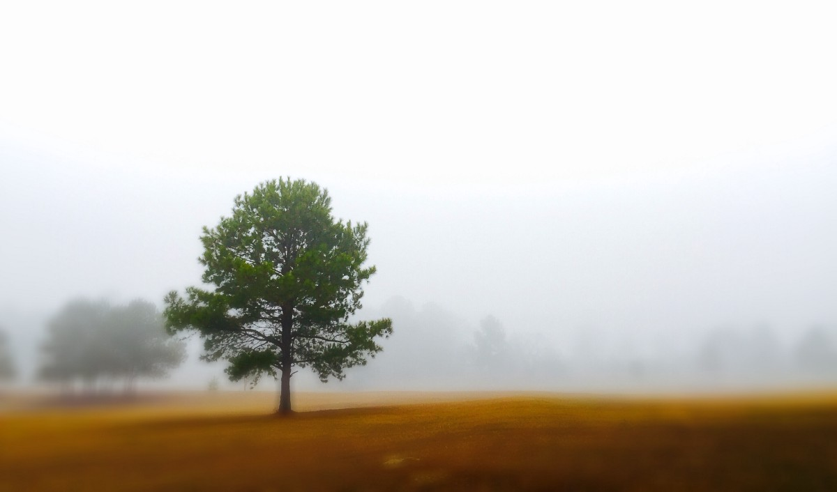 Super Foggy Morning in the Pasture