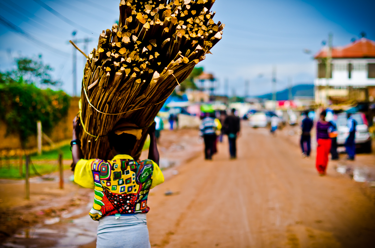 Woman Carrying a Huge Load of Sticks