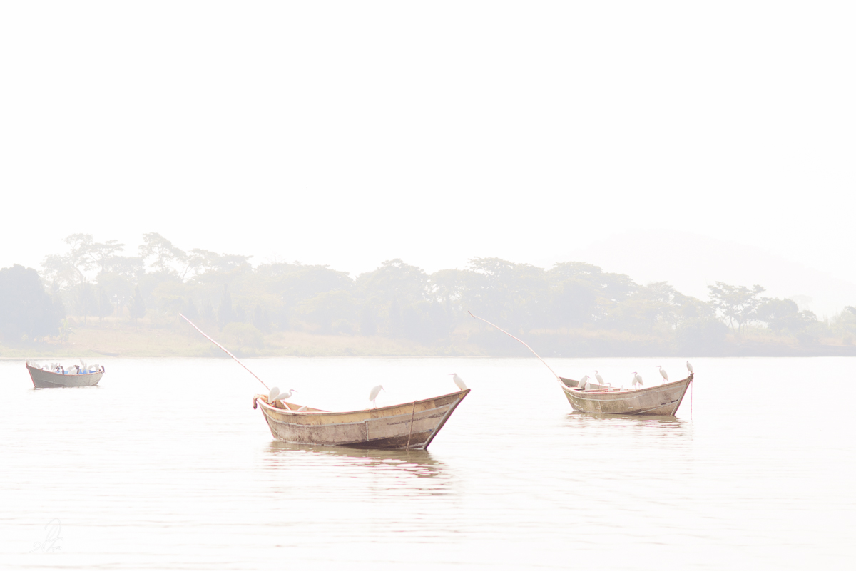 Birds Sitting on a Fishing Boat on Lake Victoria