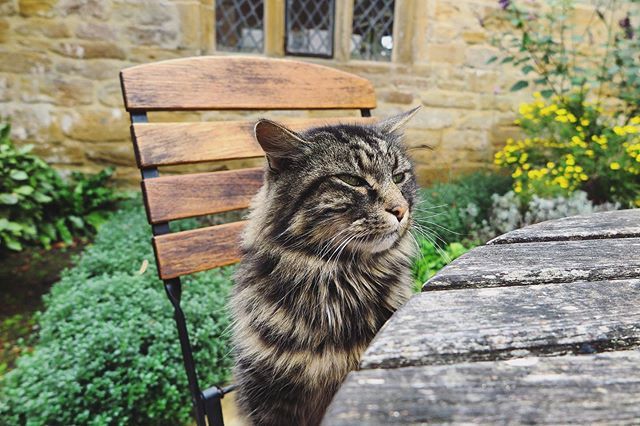 Happy Caturday 👀 This Spike (I think), one of the resident cats @montacute_nt who joined us for afternoon tea.  What are your plans this weekend? • • • #montacute #montacutehouse #montacutehouseandgardens #nationaltrust #deardorset #visitsomerset #visitdorset #swisbest #englishcountrygarden #explore #somerset #nationaltrustgardens #catsofinstagram #cats_of_instagram #catstagram