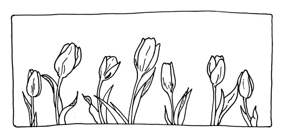 Tulips+Header.jpg