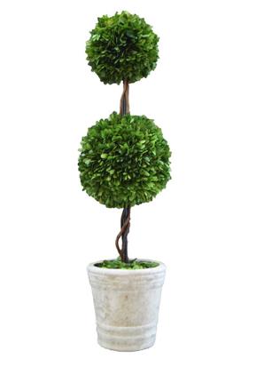 Box Ball Topiary